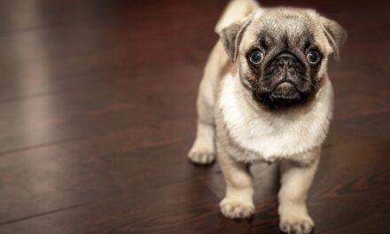 İngilizlerin yüzde 15'i parola olarak evcil hayvanlarının ismini kullanıyor